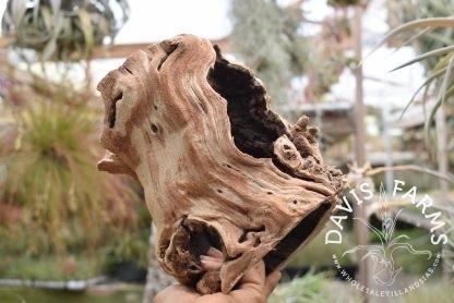 Grape wood trunk