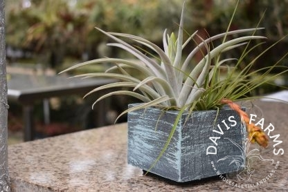 Handcrafted Wooden Planter, Square